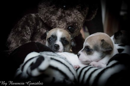 Los perritos de Cloe